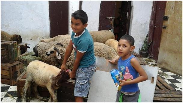 mouton et les 2 enfants Ajlid